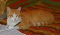 Le chat écrivain