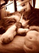 Le chat en cette soirée d'hiver dort à point fermé.