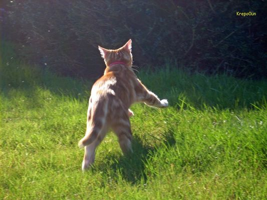 Le chat en pleine action