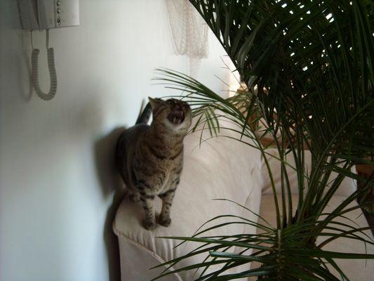 le chat et le palmier