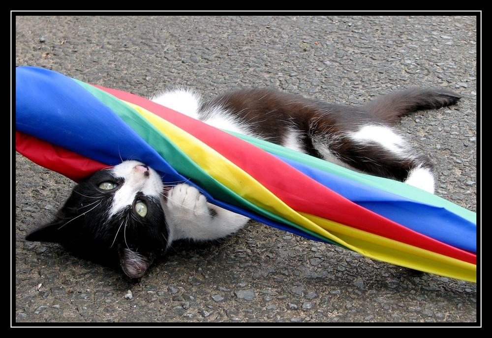 le chat et le parapluie