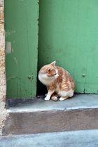 le chat isolé