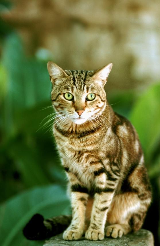 Le Chat Jardinier