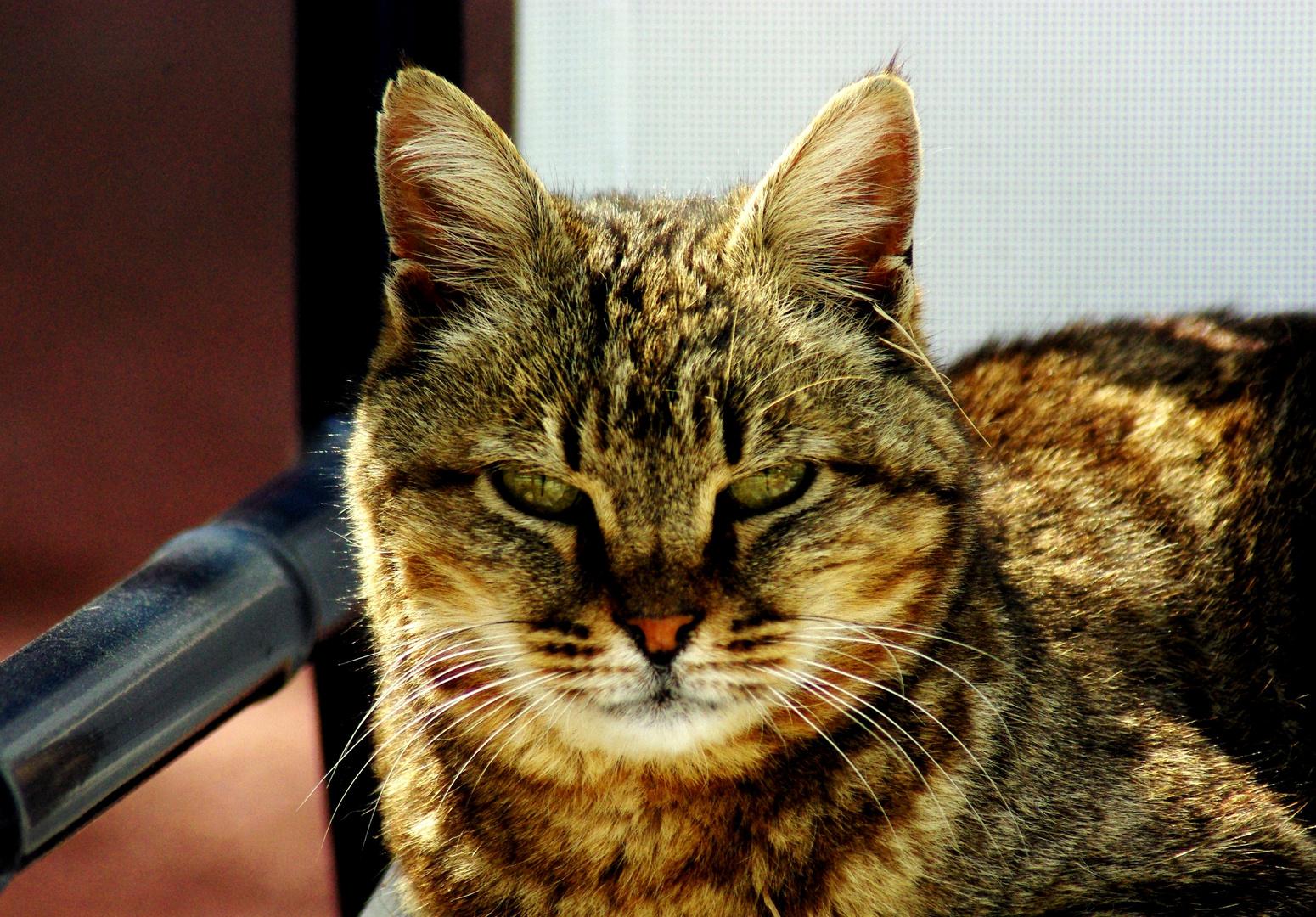 """"""" Le chat mijote et ne bout jamais. Le chat est un animal concentré, un poêle à combustion lente"""""""