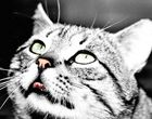 Le chat qui n'a pas froid aux yeux.