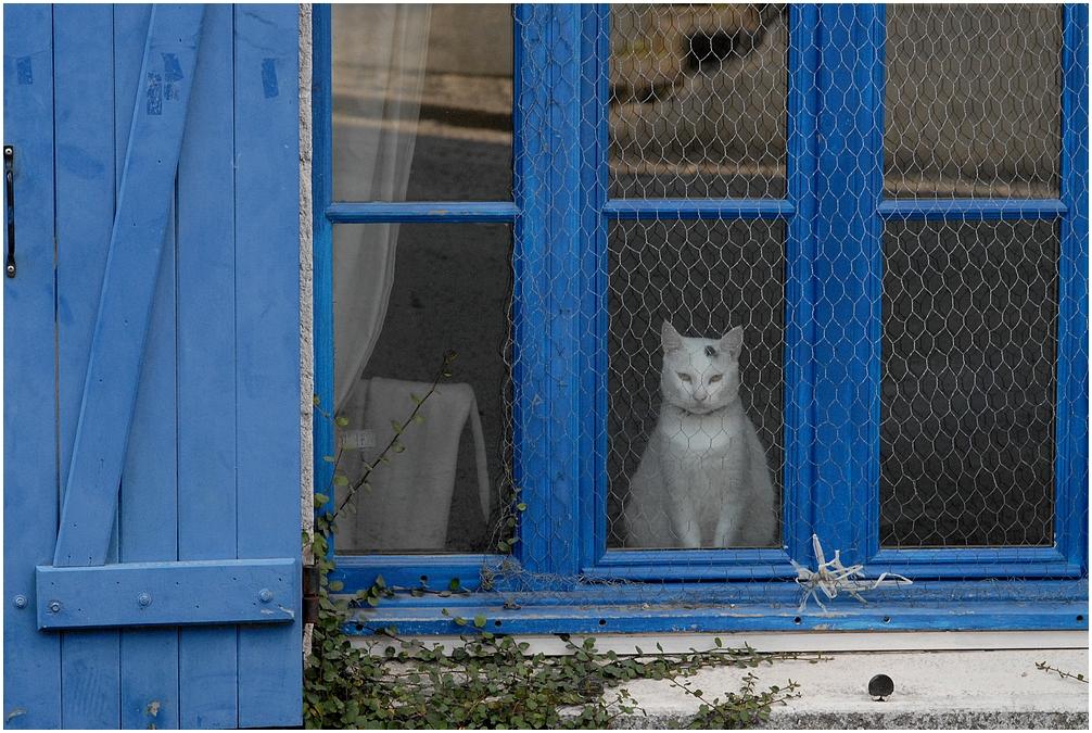 Le chat qui rêve..........