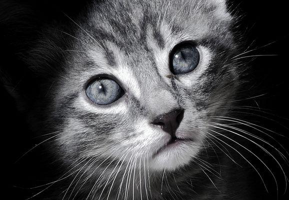 Le chat sorti de l'ombre