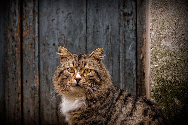 Le chat Tristan...