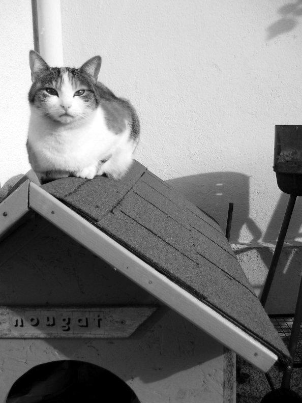 Le chat vainqueur