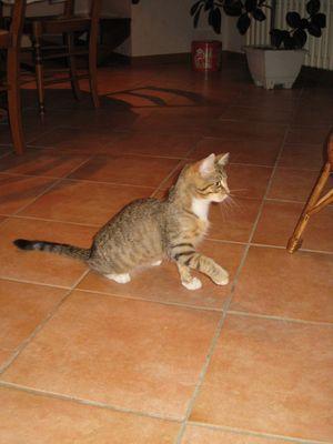le chaton vadrouille