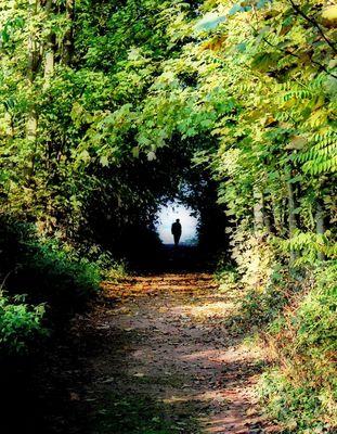 Le chemin des ombres