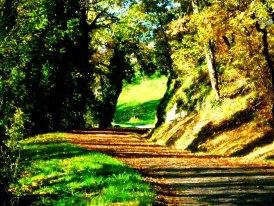 le chemin mysterieux...