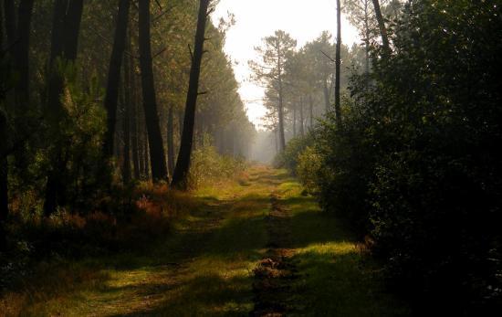 Le chemin paisible