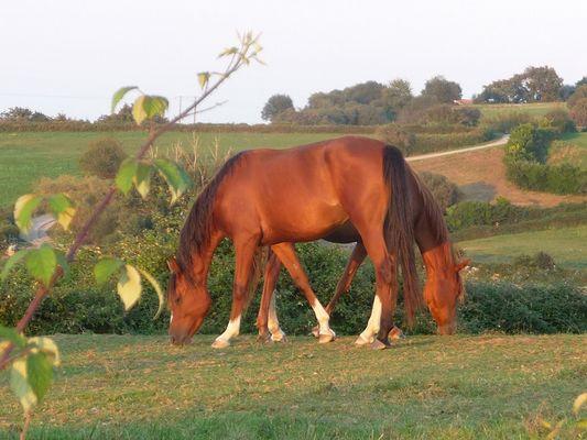 le cheval a deux têtes