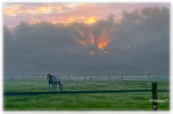 Le cheval dans la brume ......