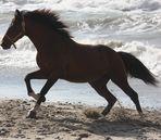 Le cheval d'écume ...