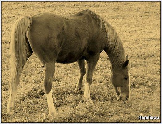 Le cheval d'une fin de journée