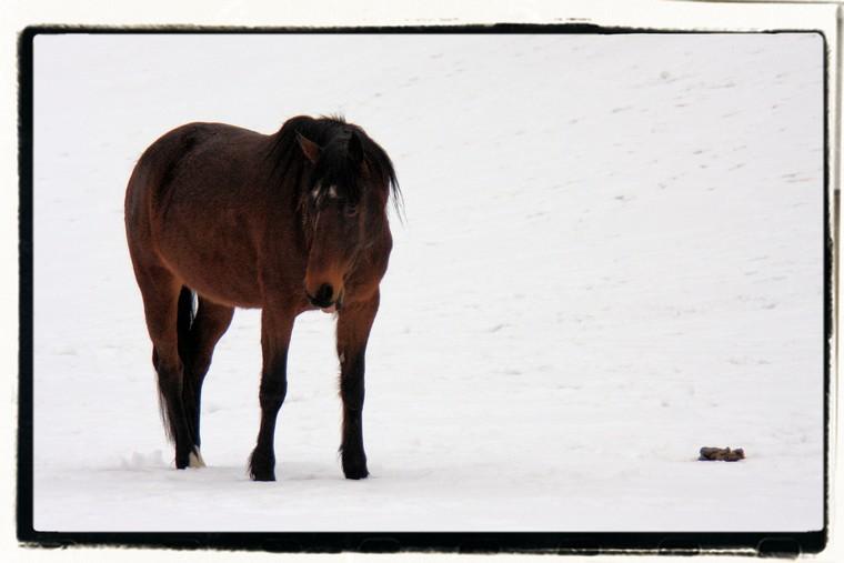 le cheval et la neige!
