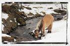 le cheval et la rivière