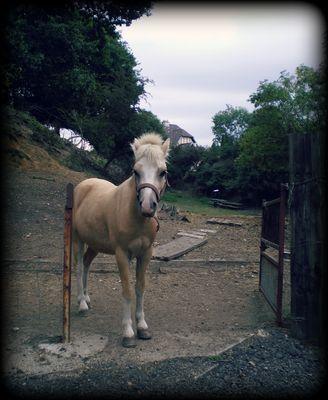 le cheval galope après la liberté ...