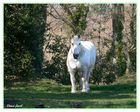 Le Cheval Normand