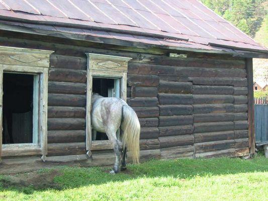 Le cheval par la fenêtre