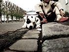 Le chien apprend a l' enfant la fidélité et la persévérance.