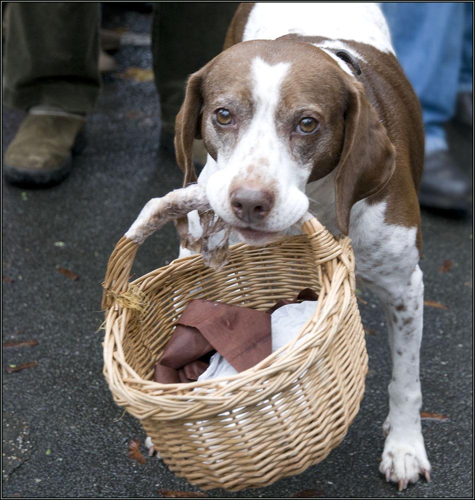 Le chien au panier