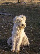 le chien du berger à le vernet