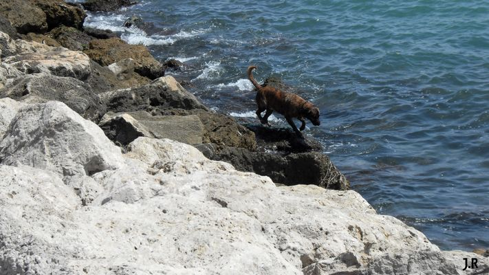 Le chien et la Mer