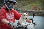 le chien qui aimait faire de la moto