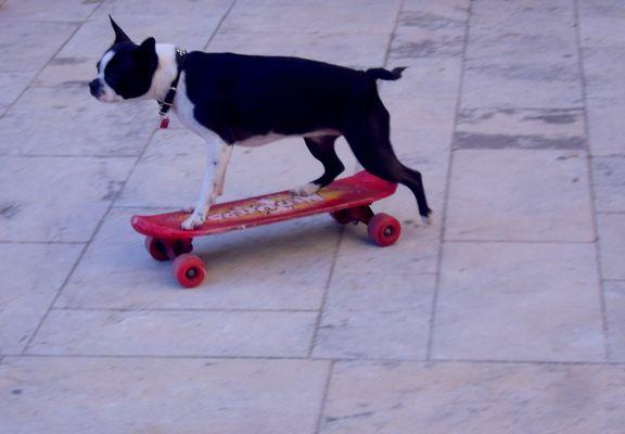Le chien qui aimait le skate ...