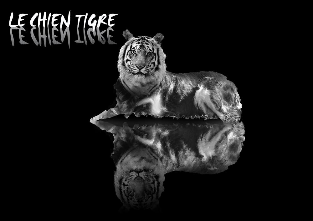 le chien tigre