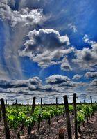 le ciel du vin