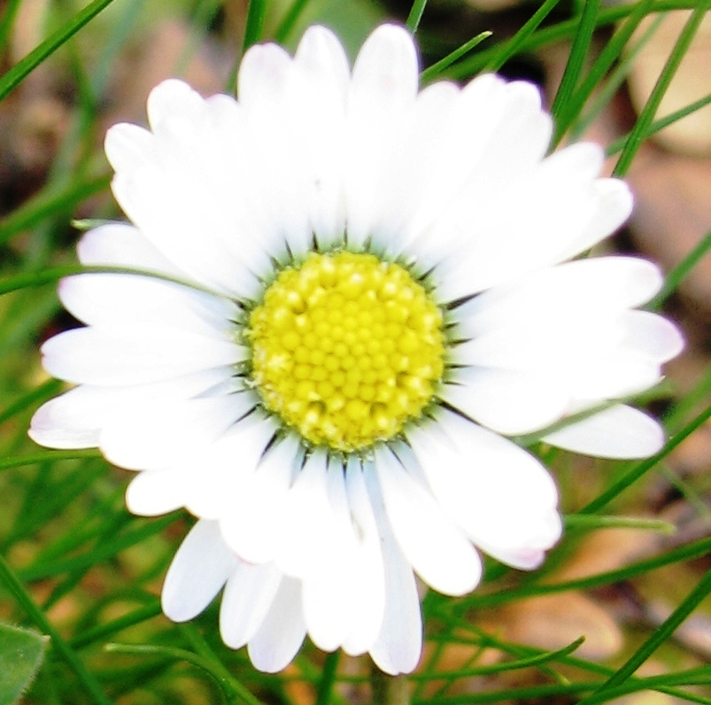 Le coeur de la fleur