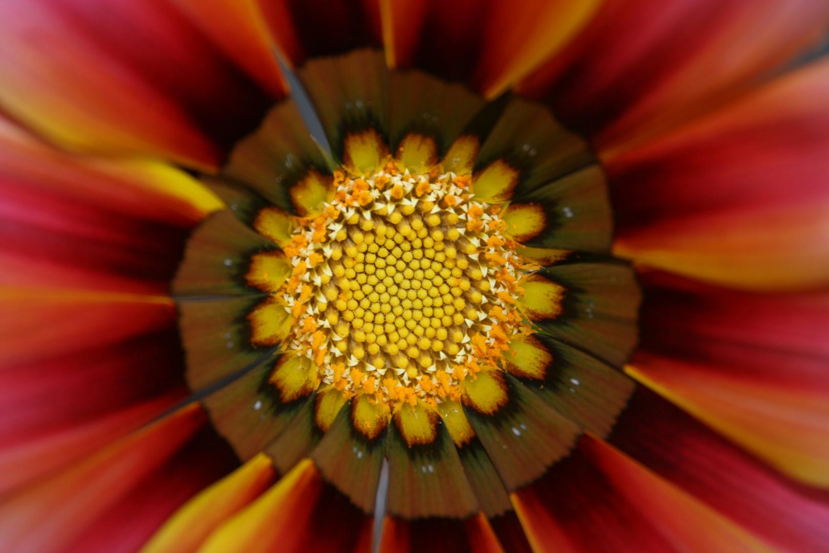 le coeur d'une fleur