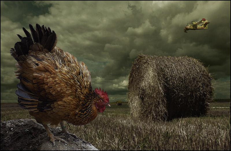 Le coq et le canadair