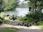Le Corbeau aux ailes de satin noir