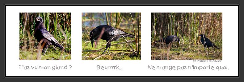Le Corbeau et le Gland