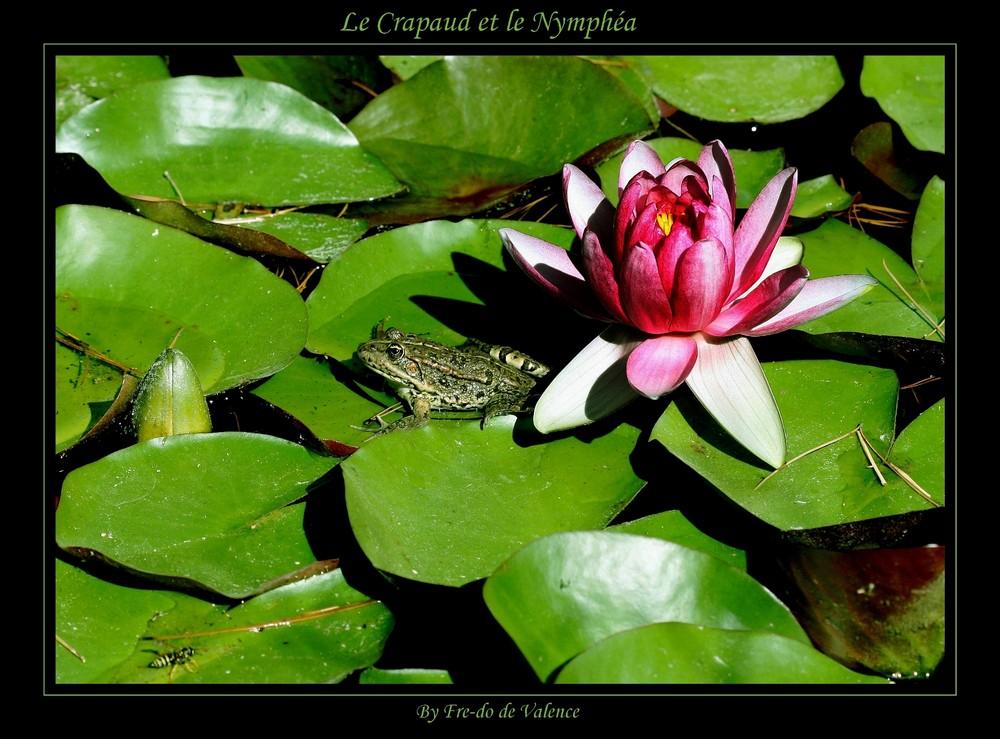 Le Crapaud et le Nymphéa