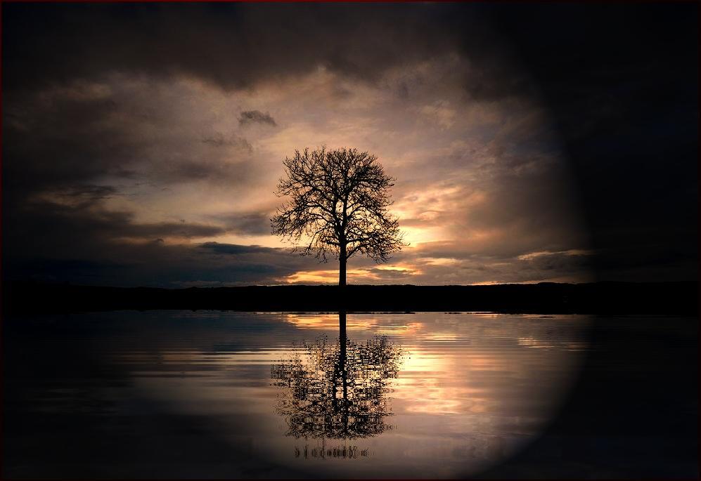 Le crépuscule de l'arbre