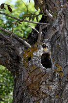 Le cri de l'arbre