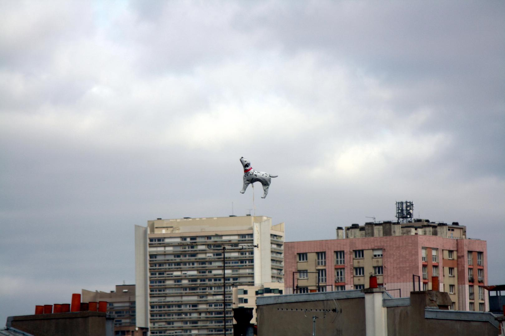 Le Dalmatien volant
