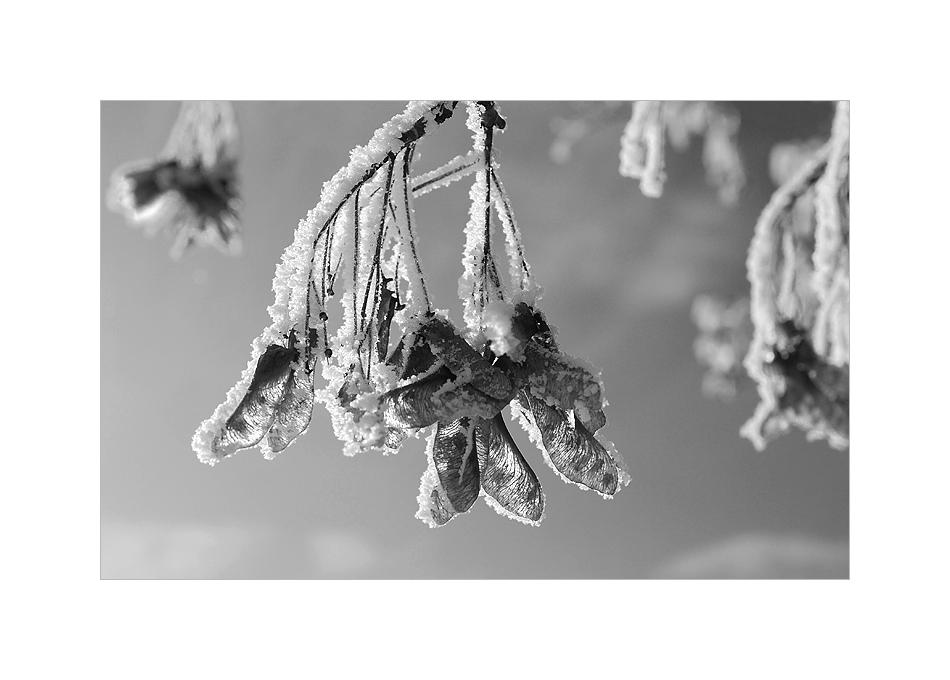 Le début de l'hiver