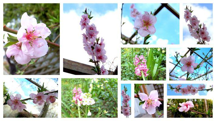 Le début du printemps...