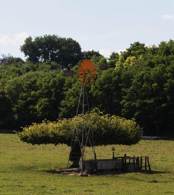 le d'hélice d'un arbre