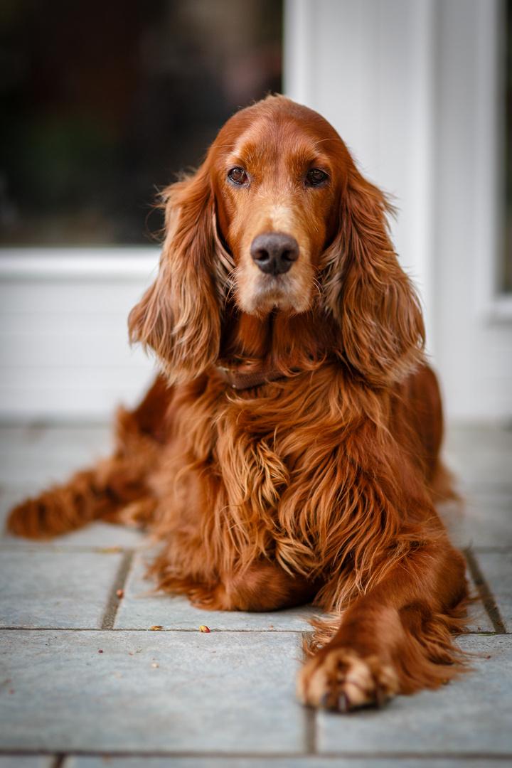 Le Dog
