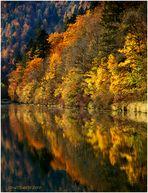 .....Le Doubs et ses reflets....