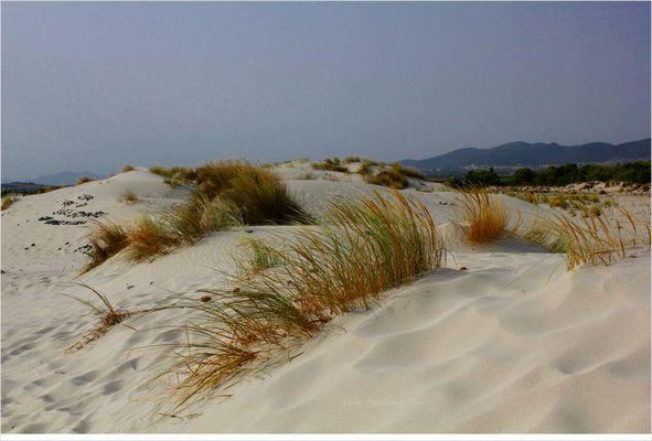 Le dune di Porto Pino