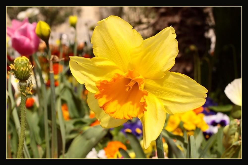 Le festival des fleurs en Avignon